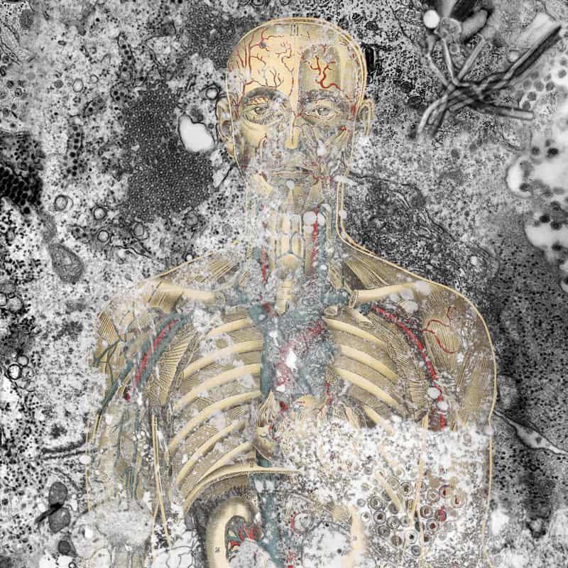 Global Viral – Die Virus Metapher
